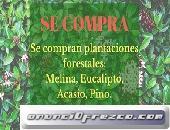 Se compran plantaciones forestales